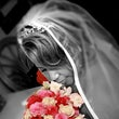 WEDDING & ENGAGEMENT PORTRAITS - Shea & Chissey Engagement Photo Jesse & Belinda Brown Wedding  Mark & Raven Mosley Wedding