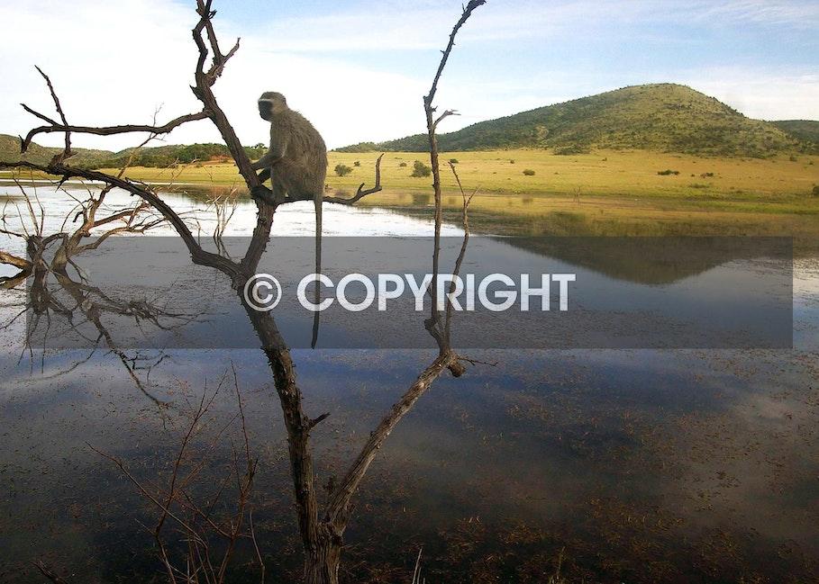 Pilanesberg National Park South Africa