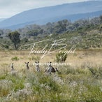 The Snowy Mountains - Landscapes, Bugs & Wildlife from around Old Camp in the Snowy Mountains.