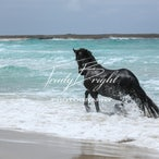 Beach with Horses - Horses & the Beach