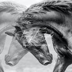 Horse Prints for Canvas - Horses For Canvas Prints