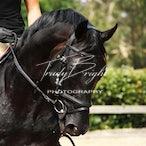 Equine Adults Training