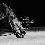 Equine Elegance Black & White - Enhanced Images in Black & White