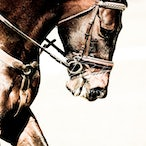 Equine Enhanced
