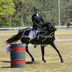 Working Equitation Sat 27th Oct 2012