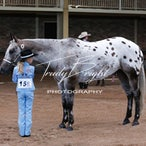 C.C Regional Appaloosa Club Feb 2014