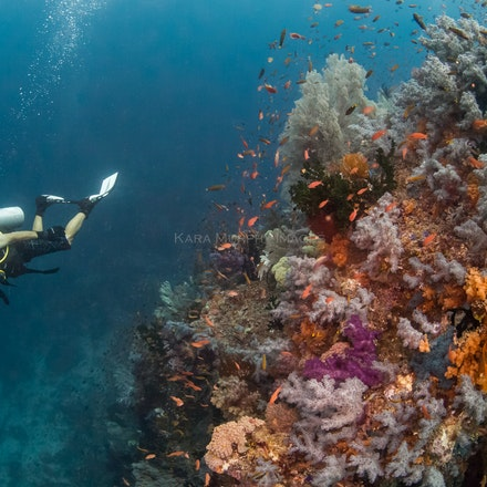 Dream diving, Raja Ampat - Scuba divers in Raja Ampat are treated to a dreamy underwater world.