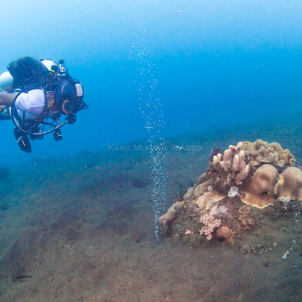 Volcano dive, Sumbawa 2 - A scuba diver observes the gases emerging from underwater vents alongside a Sumbawa volcano.