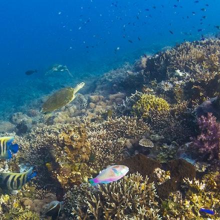 Tetawa Besar - Tetawa Besar's beautiful underwater world, Komodo National Park, Indonesia.