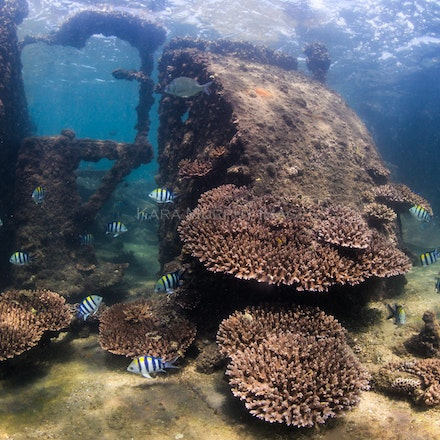 Tangalooma Wrecks - The underwater world of the Tangalooma Wrecks, off Moreton Island, Queensland.