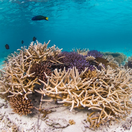 Coral frames 2 - Coral frames at Four Seasons Kuda Huraa grow new life beneath the waves.