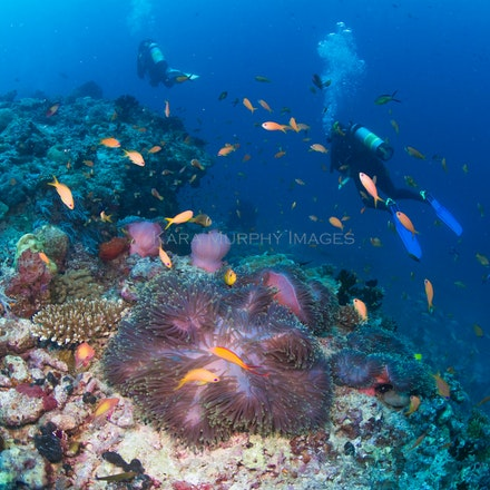 Divers and anemonefish