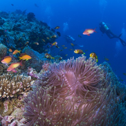 Divers and anemonefish2