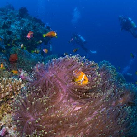 South Ari Atoll scene