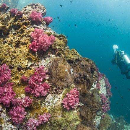 Diving Three Islets 2 - Diving Three Islets, Mergui Archipelago, Myanmar