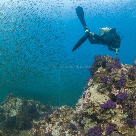 Diver, Western Rocky - A diver explores Western Rocky.