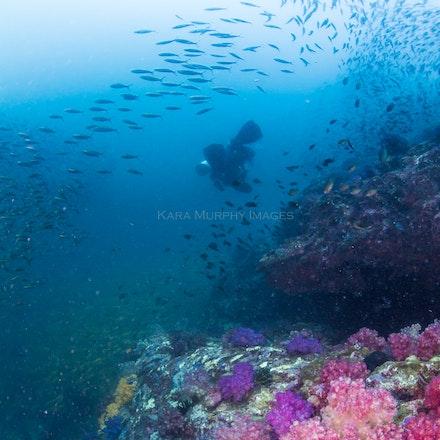Diver, North Rock - A diver explores the North Rock dive site.