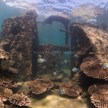 Tangalooma Wrecks 2 - The underwater world of the Tangalooma Wrecks, off Moreton Island, Queensland.