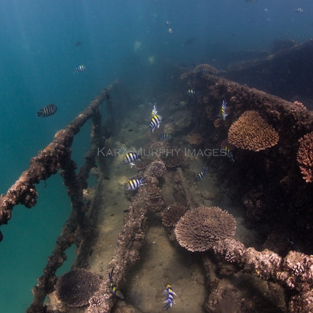 Tangalooma Wrecks 3 - The underwater world of the Tangalooma Wrecks, off Moreton Island, Queensland.