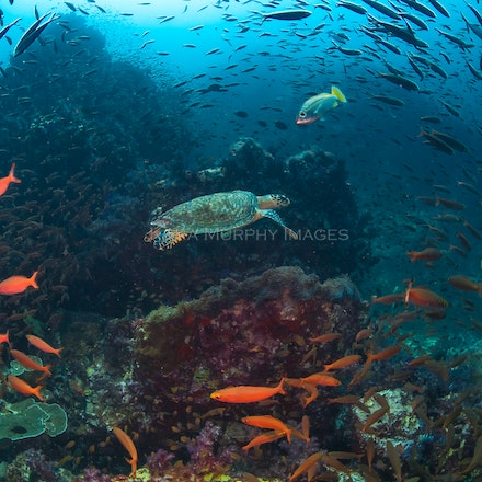 Other destinations - Other underwater destinations, including Raja Ampat (Indonesia), the Similan Islands (Thailand), and the Maldives.