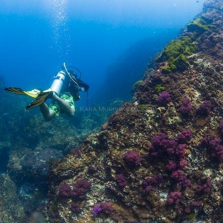 Diving Richelieu Rock - A diver explores Thailand's premier dive site, Richelieu Rock.