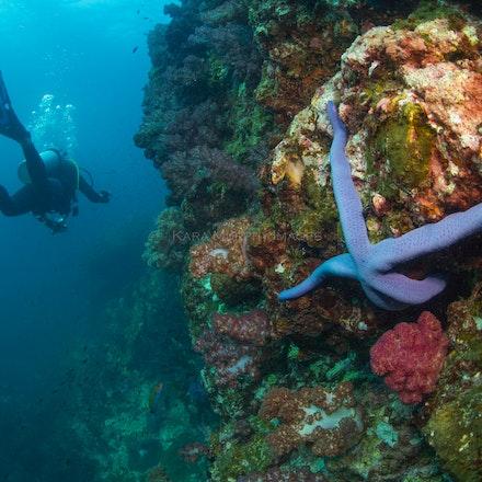Exploring Richelieu Rock - A diver explores Richelieu Rock, Thailand's premier dive site.