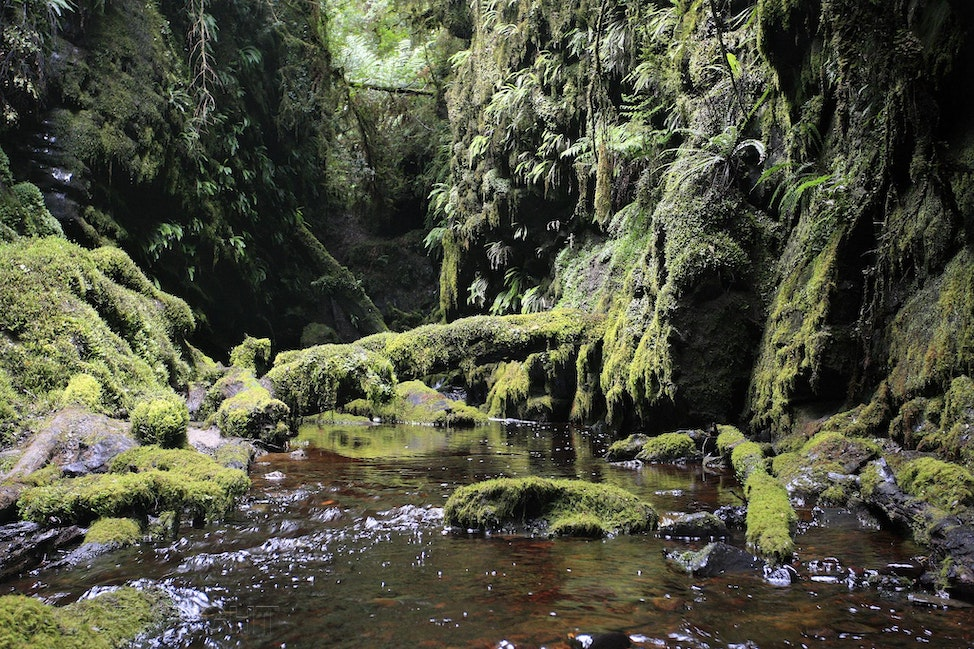 Rainforest Tasmania - The lost world, Franklin River Tasmania. An image of lush green rainforest and pristine stream by Cathy Finch Photography.