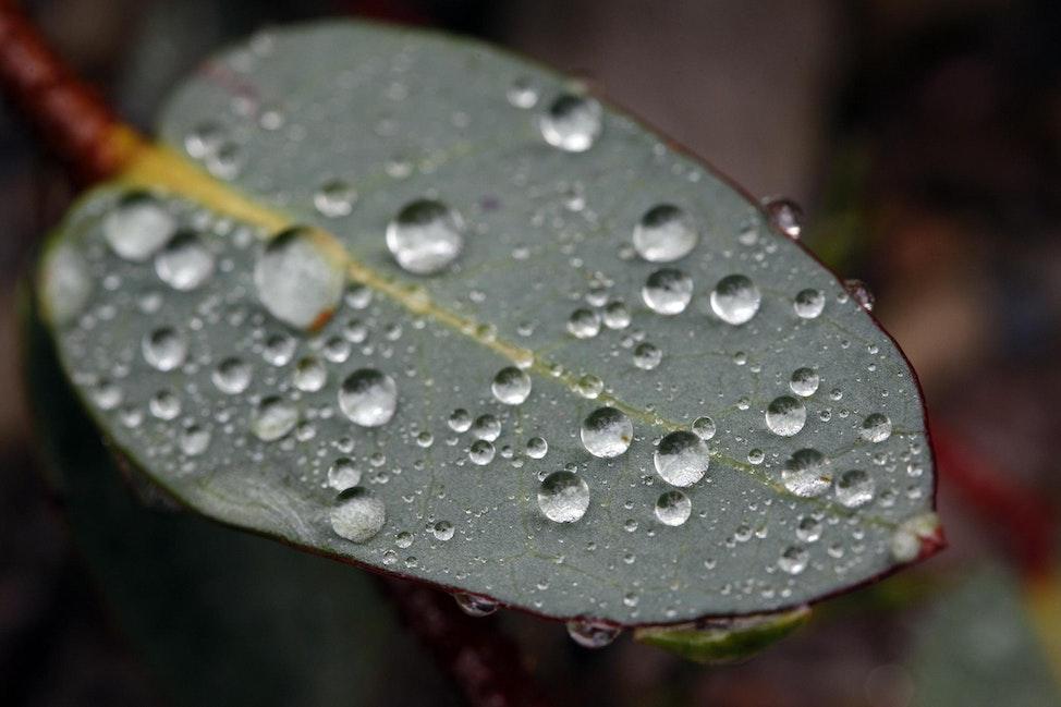 leaf raindrops