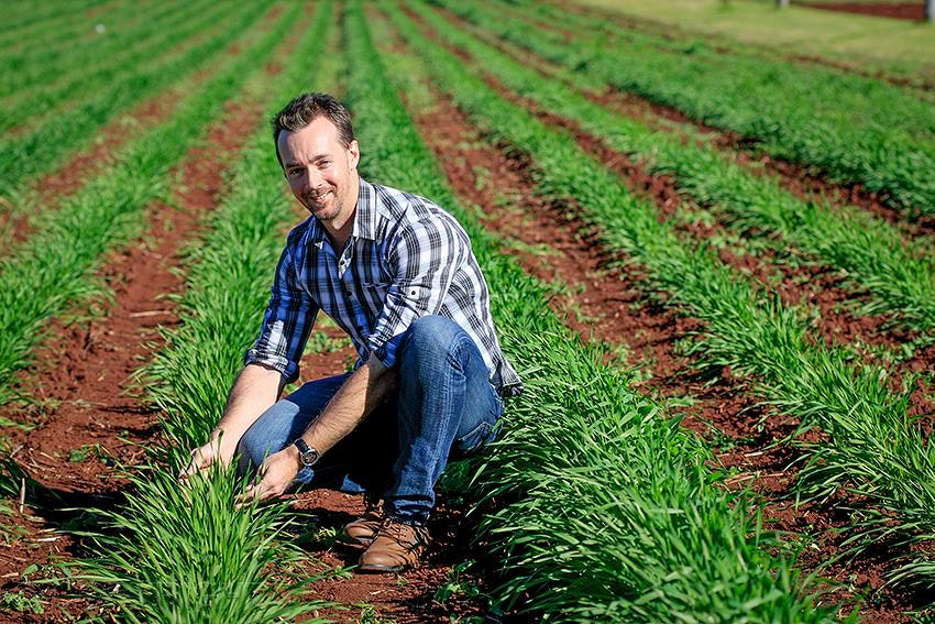 Geneticist - Geneticist from the University of Queensland Dr Lee Hickey inspect plants in the barley leaf rust nursery at the Leslie Research Centre, Toowoomba....