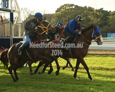 5 SEPT RANDWICK JUMP OUTS AND TRACK WORK