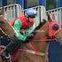 CARAVEL RACE 3 IMG_6484 2014-10-03