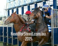 9 JAN 15 RANDWICK JUMPOUTS AND TRACK WORK
