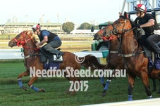 16 JAN 15 RANDWICK JUMP OUTS AND TRACK WORK