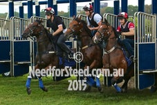 20 FEB 15 RANDWICK JUMP OUTS AND TRACK WORK
