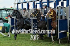 12 JUNE RANDWICK JUMP OUTS AND TRACK WORK