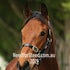 EXCEED AND EXCEL X RED RIVER IMG_9686 2015-08-02