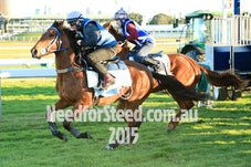 28 AUG RANDWICK JUMP OUTS AND TRACK WORK