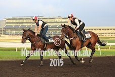 11 DEC RANDWICK JUMP OUTS AND TRACK WORK