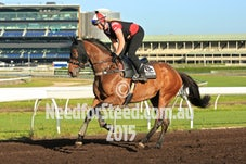 4 DEC RANDWICK JUMP OUTS AND TRACK WORK