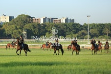 10 FEB RANDWICK TRACK WORK