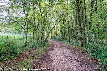 A track to a Roman Ruin - 1239