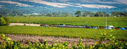 The Peloton over vineyards