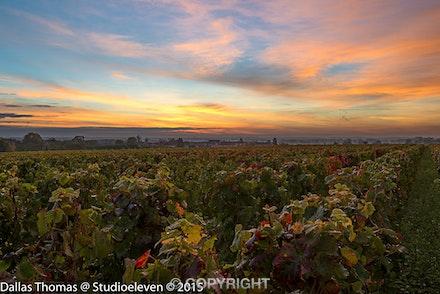 057 Burgundy 051015-1296-2
