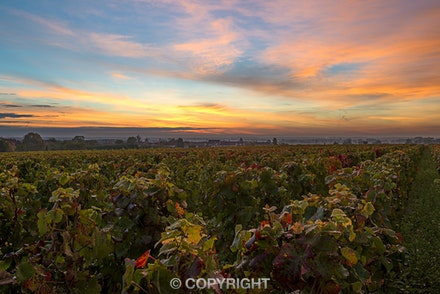 057 Burgundy 051015-1296-2 - Sunrise over the vineyards Nuitts St Georges, Burgundy, France, just prior to dawn a light shower of rain fell, the vines...
