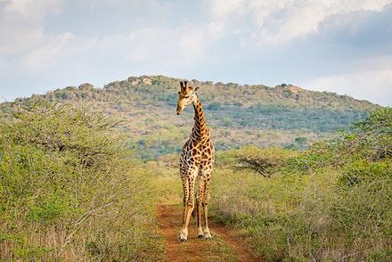 021 Thanda Safari Lodge 030515-8330-Edit