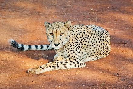 021 Thanda Safari Lodge 030515-8505-Edit