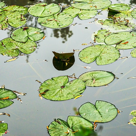 126 - Giverny - 21-09-16-0599-Edit - Lily pond