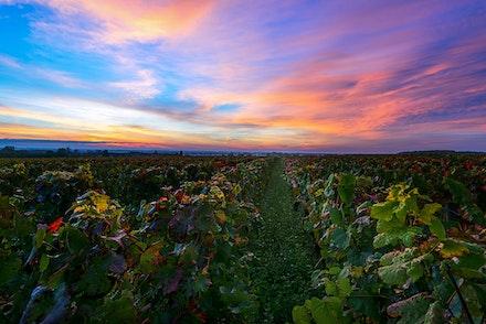057 Burgundy 051015-1300-Edit-2 - Sunrise in Burgundy