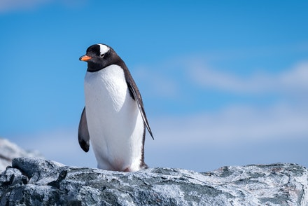 Antartica - Antarctica, the southernmost continent and site of the South Pole, is a virtually uninhabited, ice-covered landmass. Most cruises to the continent...