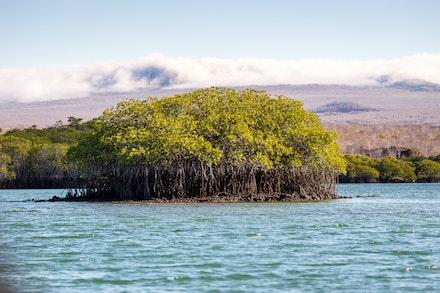 256 - Galápagos - 301017-8979